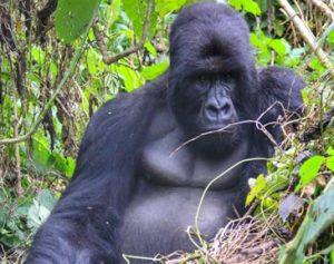 2 Days Uganda Gorilla Trek