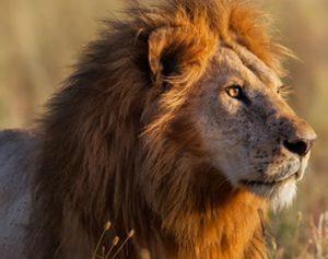 Uganda Gorilla Safari & Wildlife Trekking