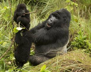 10 Days Chimpanzee Tracking and wildlife tour