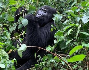 20 Days Luxury Uganda Safaris