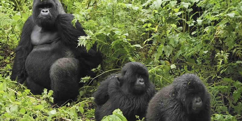 Gorilla Trekking Adventure Tours