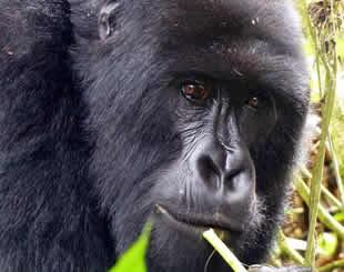 4 Days Gorilla Trek & Wildlife Tour