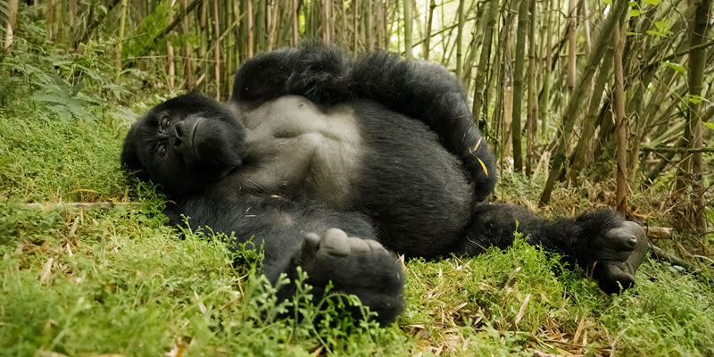 14 Days Gorilla trek & Tanzania Safari