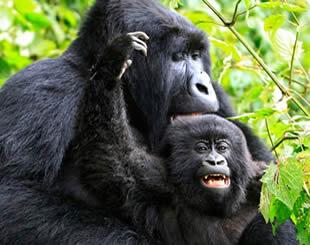 Primates in Africa