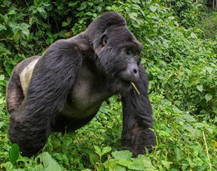 10 Days Gorilla & wildlife Tour