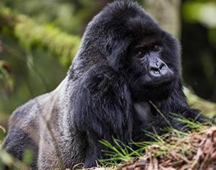 9 Days Gorilla & Wildlife Tour