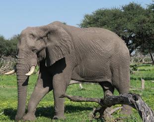 5 Days Uganda Gorilla & Wildlife Tour